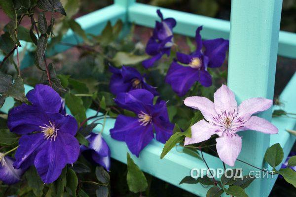 Opora-1