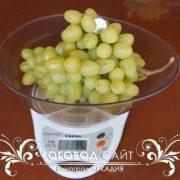 виноград сорт аркадия саженцы купить