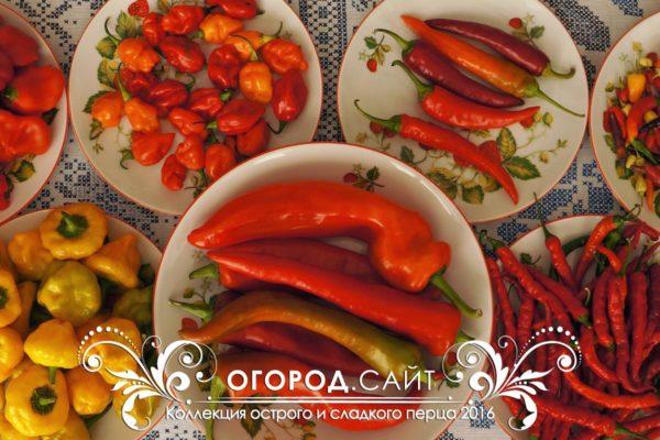 Семена перца и баклажанов