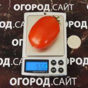 томат дамские пальчики фото характеристика описание сорта