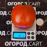 томат тарасенко 1 фото