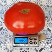 Кишинёвские помидоры
