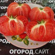 Томат Сызранская розовая ранняя