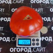 томат валютный фото