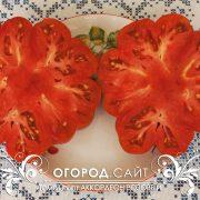 pomidor_akkordeon_rozovy_4
