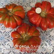pomidor_akkordeon_rozovy_8
