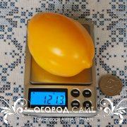 pomidor_anna_german_1