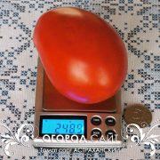 pomidor_astrahanskiy_2
