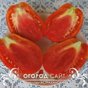pomidor_astrahanskiy_3