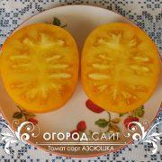 pomidor_azoyushka_2