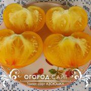 pomidor_azoyushka_3