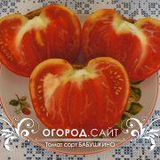 pomidor_babushkino_7