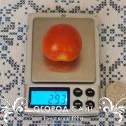 pomidor_cherry_1