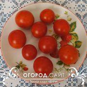 pomidor_cherry_2