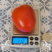 pomidor_de_barao_tsarskiy_4