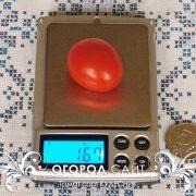 pomidor_detskiy_1