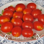 pomidor_detskiy_3