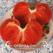 pomidor_dobry_molodets_2