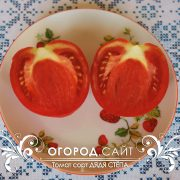 pomidor_dyadya_stepa_2
