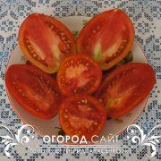 pomidor_gibrid_tarasenko_1_2