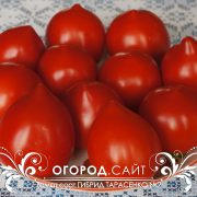 pomidor_gibrid_tarasenko_2_2