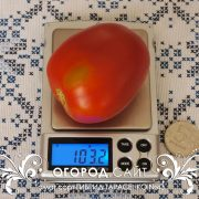 pomidor_gibrid_tarasenko_43_1