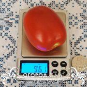 pomidor_gibrid_tarasenko_4_4