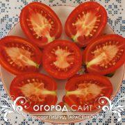 pomidor_gibrid_tarasenko_4_5