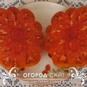 pomidor_gigant_suhanova_3