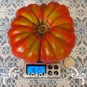 pomidor_gribnoe_lukoshko_1