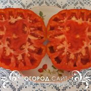 pomidor_gribnoe_lukoshko_3