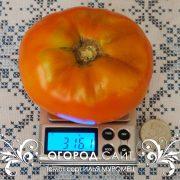 pomidor_ilya_muromets_3