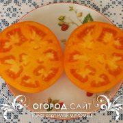 pomidor_ilya_muromets_4