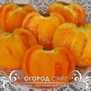pomidor_ilya_muromets_5