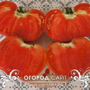 pomidor_kavkazets_3