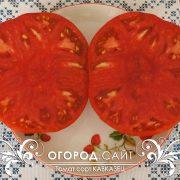 pomidor_kavkazets_5