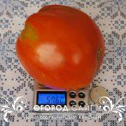 pomidor_kenigsberg_krasny_2