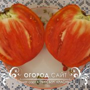 pomidor_kenigsberg_krasny_3