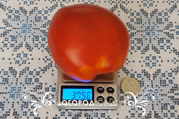 pomidor_knyaginya_1