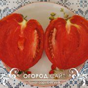 pomidor_knyaginya_4