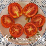 pomidor_novinka_pridnestrovya_2