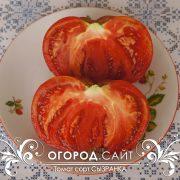 pomidor_syzranka_2