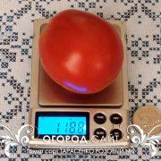 pomidor_tarasenko_rozovy_2_1