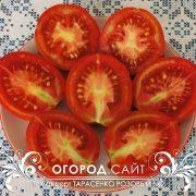 pomidor_tarasenko_rozovy_2_2