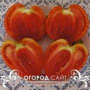 pomidor_vosmerka_2