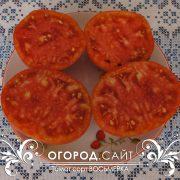 pomidor_vosmerka_3