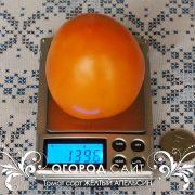pomidor_zhelty_apelsin_4