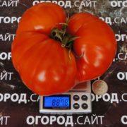 Корнеевский красный
