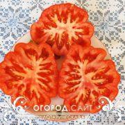 Редкий сорт томатов Лотарингская красавица