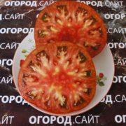 томат полосатый шоколад описание